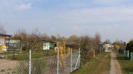 Kleingärten in Greifswald