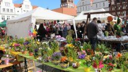 Oster- und Blumenmarkt Greifswald