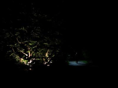 Sommernachtsklänge im Arboretum